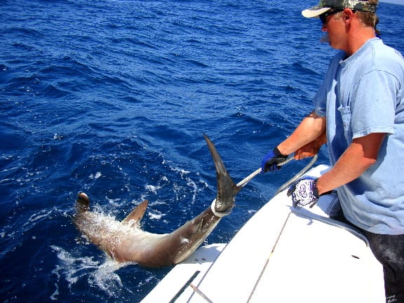 Fishing charter trip options rates arts adventures for Cape canaveral fishing charters